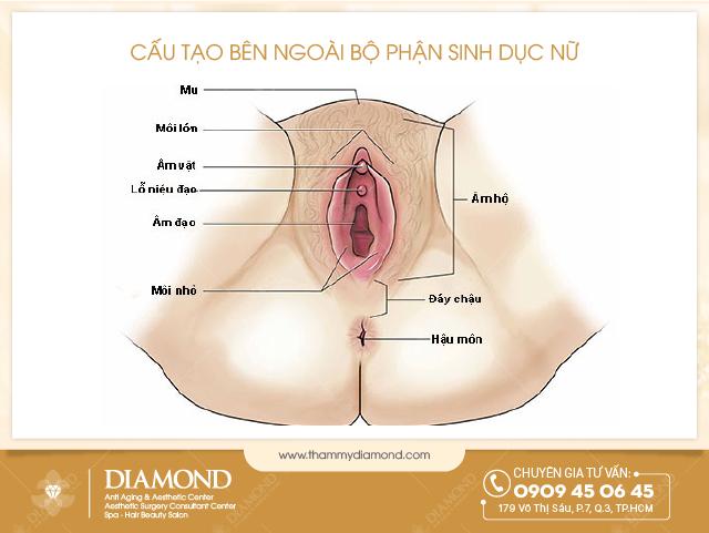 Cấu tạo bên ngoài bộ phận sinh dục nữ