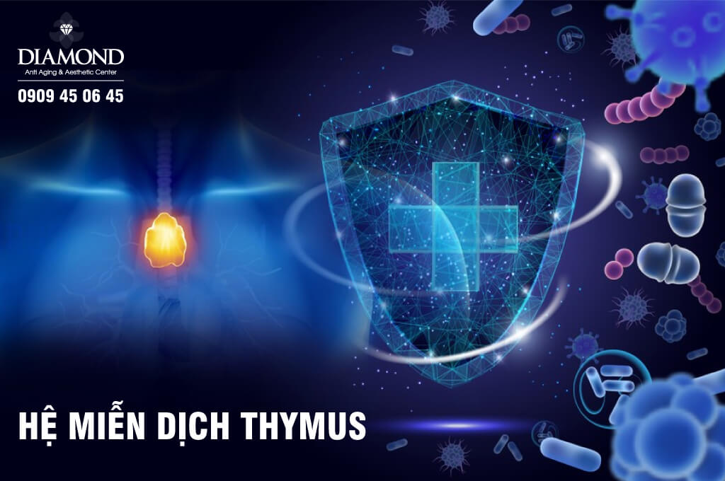 Hệ miễn dịch Thymus